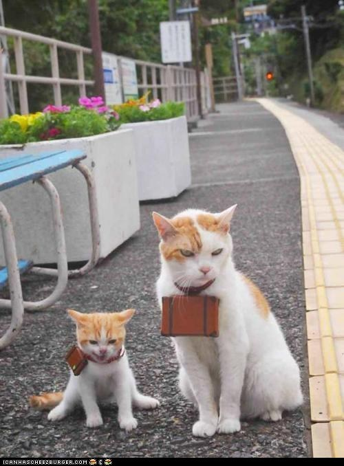 adventure Cats collars cyoot kitteh of teh day kitten matching moms suitcases Travel traveling - 6479338240