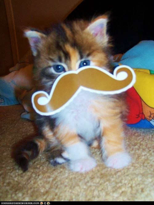 Cats costume cyoot kitteh of teh day fancy hiding incognito kitten moustaches - 6479349504