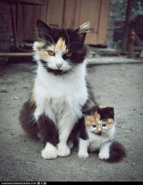 Cats,cyoot kitteh of teh day,family,kitten,mama,mini me,moms,resemblance,similar,twins