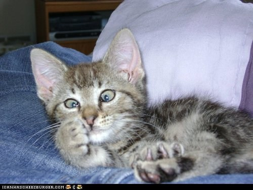 Cats,cross eyed,cyoot kitteh of teh day,derp,eyes,kitten,paws