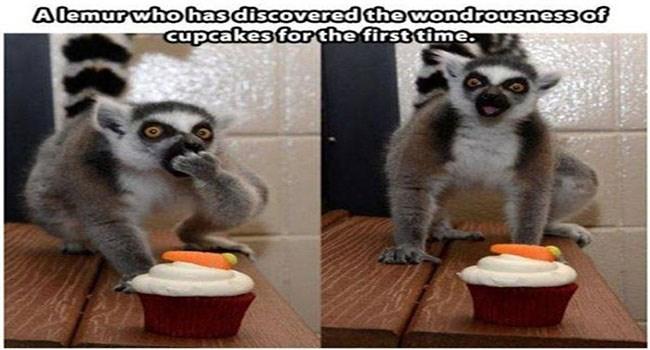 funny memes Memes animal memes animals - 6479365