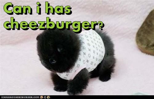 Cheezburger Image 6479505152