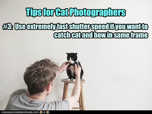 Tips for Cat Photographers #3: Use extremely fast shutter speed if you want to catch cat and bow in same frame