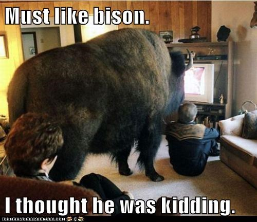 Must like bison. I thought he was kidding.