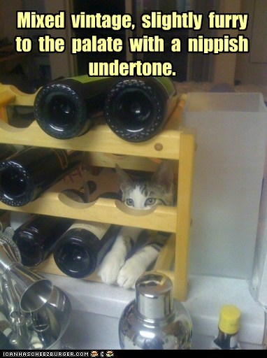 alcohol booze captions Cats vintage wine wine rack
