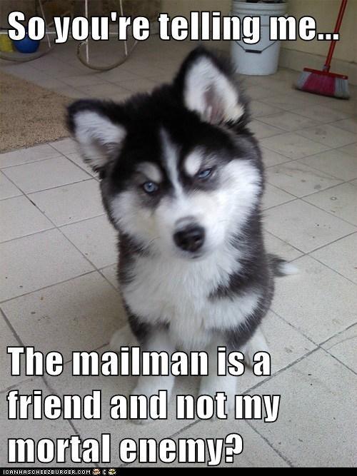 Skeptical Newborn Puppy - 6480231424