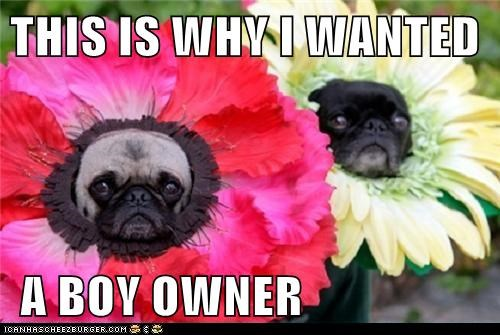 captions,costume,dogs,Flower,girls-vs-boys,pug,Sad Pug