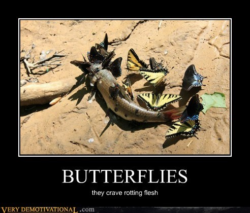 butterflies,fish,rotting flesh,Terrifying
