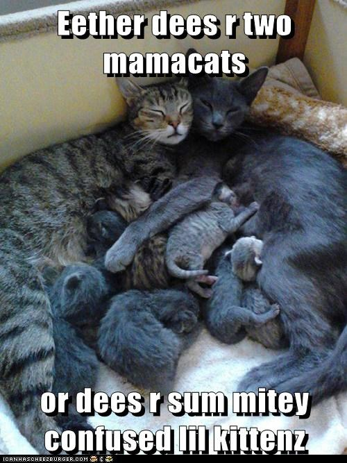 captions Cats confused dad kitten mama milk - 6480559104