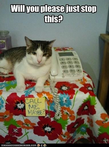 captions Cats please stop - 6480669696