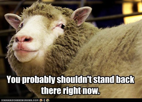 behind me,farted,sheep,smelly,smirk,stand,warning,you-shouldnt