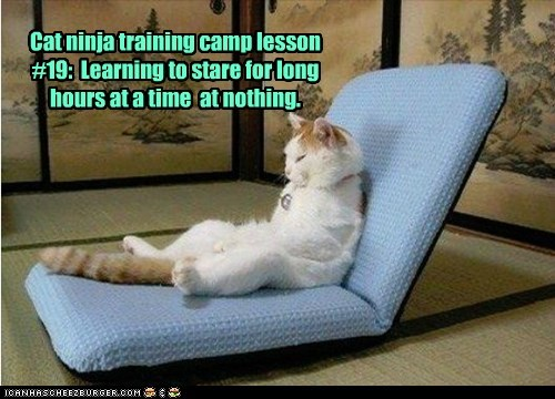 captions Cats ninja nothing stare training - 6480818432