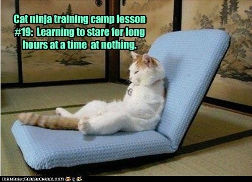 captions Cats ninja nothing stare training - 6480818432