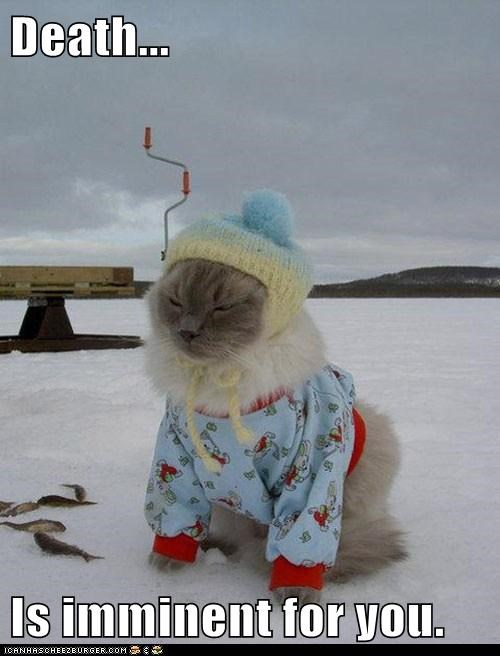 captions,Cats,cold,Death,outside,snow