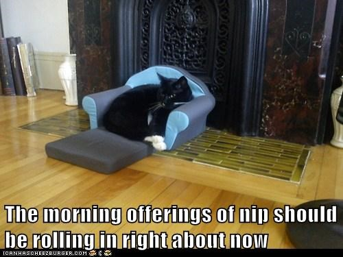 captions Cats master minions nip offering worship - 6480862464