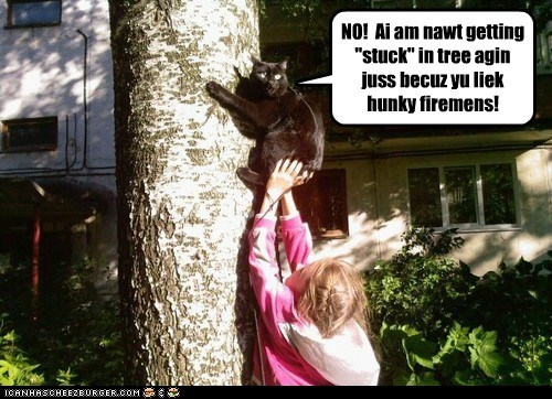 attractive captions Cats tree - 6480967168