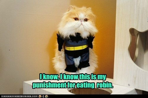 batman captions Cats costume eat food robin - 6481092352