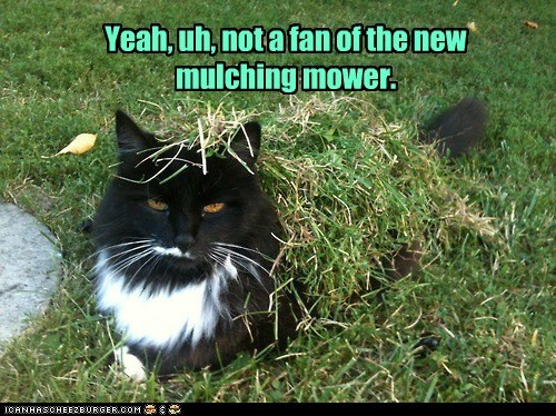 captions Cats cut grass lawn messy mower