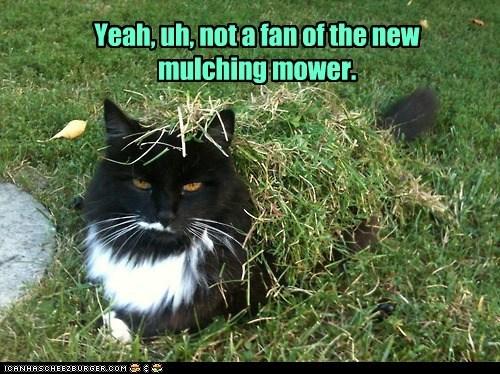 captions Cats cut grass lawn messy - 6481103360