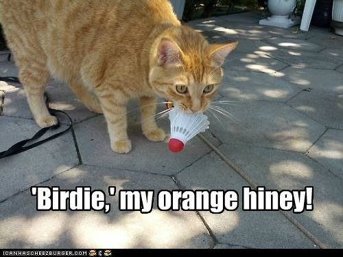 'Birdie,' my orange hiney!