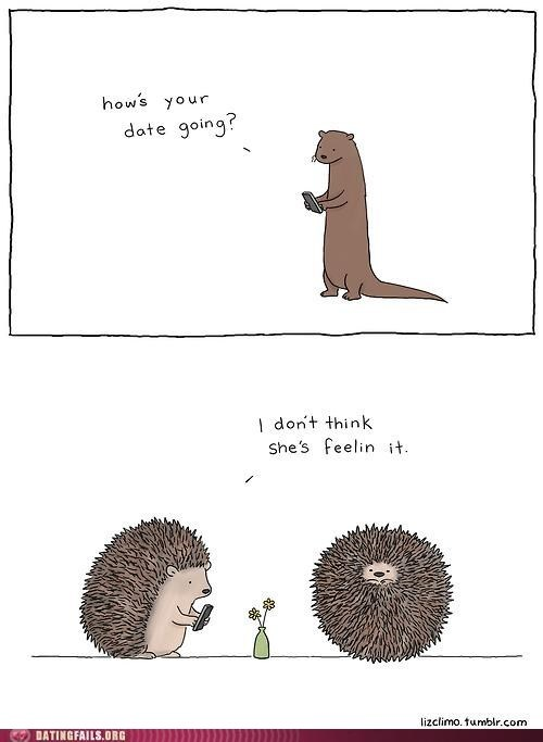 animals Awkward hedgehog hi-im-liz not feeling it - 6481131264