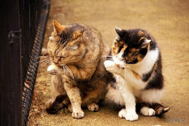 double twice photos cat photos Cats - 6481157