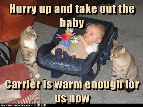 baby,captions,carrier,Cats,sit,warm