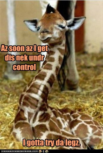 baby,captions,giraffes,legs,movement,neck,under control