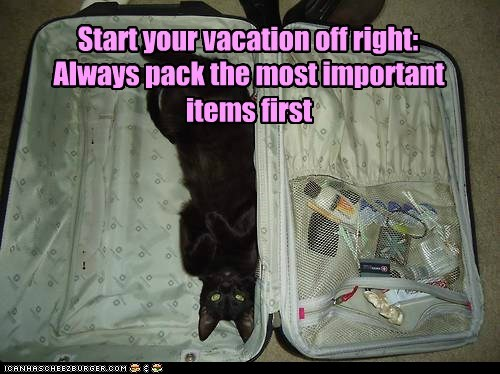 captions,Cats,pack,suitcase,vacation
