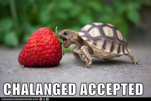Challenge Accepted,eating,huge,hungry,strawberry,turtle