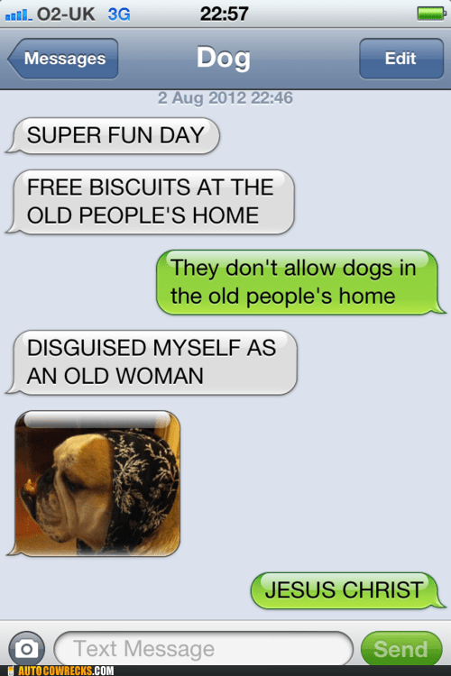 disguised as an old woman free biscuits texts from dog - 6481271808