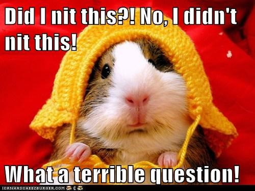 hamster hat knitting question terrible - 6481293568