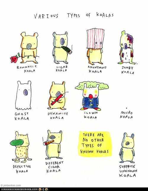 comics,cute,illustrations,jim benton,koala bears,koalas,silly,types