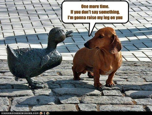 dachshund,dogs,duck,peeing,statue,warning