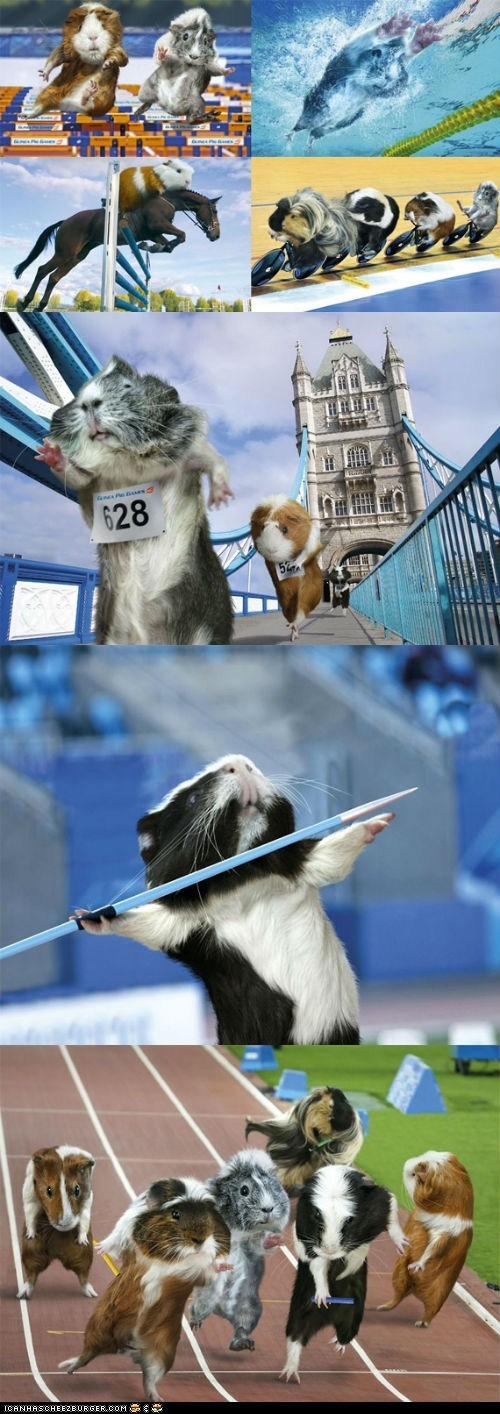 athletes guinea pigs london olympics 2012 multipanel olympics photoshopped sports - 6481427968