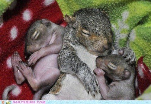 Babies squirrels mommy newborns squee - 6481439488