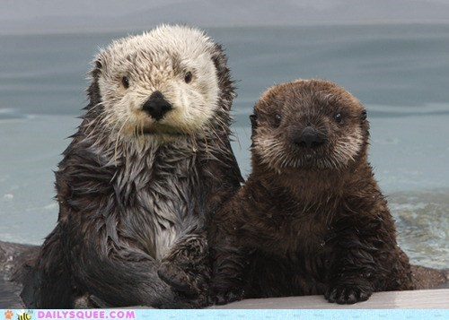 wet swimming otters squee furry - 6481445888