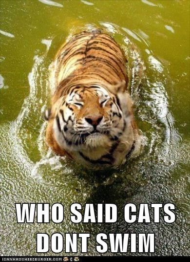 Cats,happy,pond,smile,swimming,tiger,water
