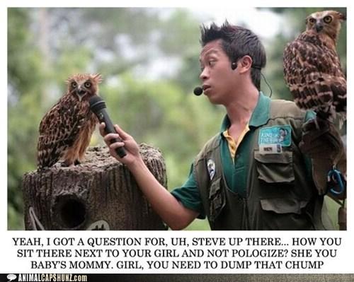 audience dump jerry springer maury Owl question talk show wat do - 6481752320