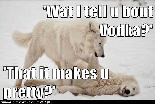 drunk polar bear pretty vodka wolves - 6481873408