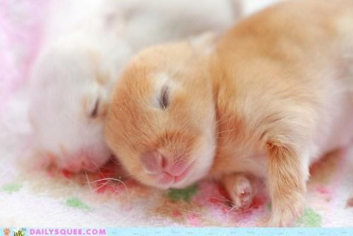 baby bunny happy bunday itsy bitsy rabbit - 6482039296