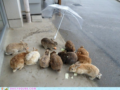 bunny,happy bunday,rabbit,raining,umbrellas