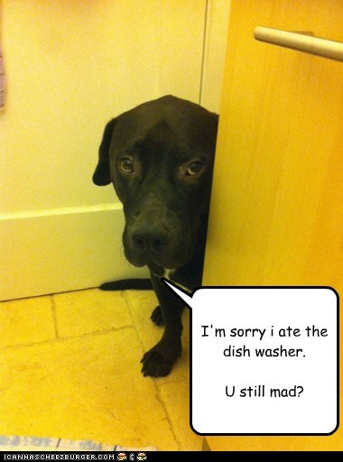 I'm sorry i ate the dish washer. U still mad?