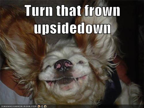captions,dogs,frown,smile,upside down dog,what breed
