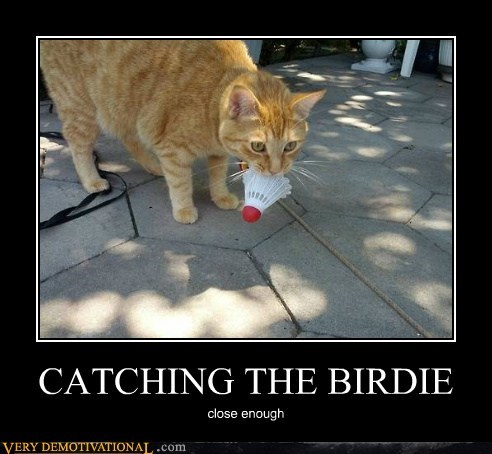 CATCHING THE BIRDIE close enough