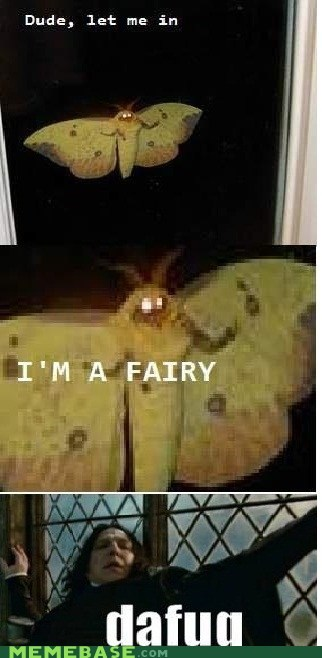 dafuq fairy Memes moth - 6482688000
