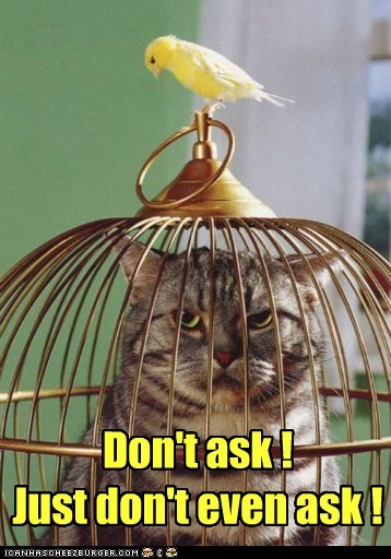 angry,bird,cage,cat,dont-ask,trapped,trick