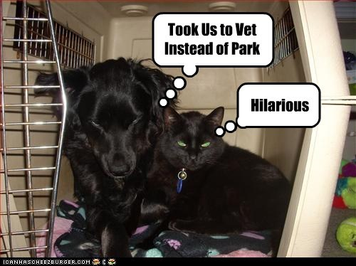 Took Us to Vet Instead of Park Hilarious