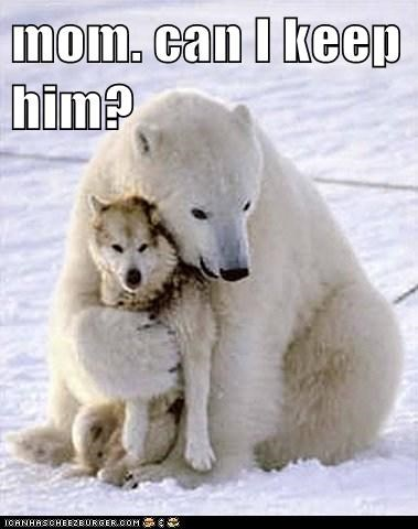 can i keep him,followed me home,friends,hug,mom,pet,polar bear,wolf
