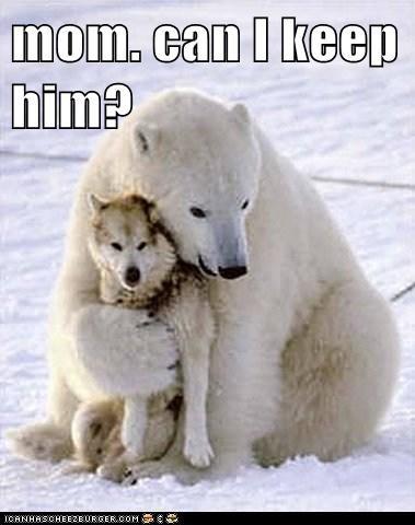 can i keep him followed me home friends hug mom pet polar bear wolf - 6483021824